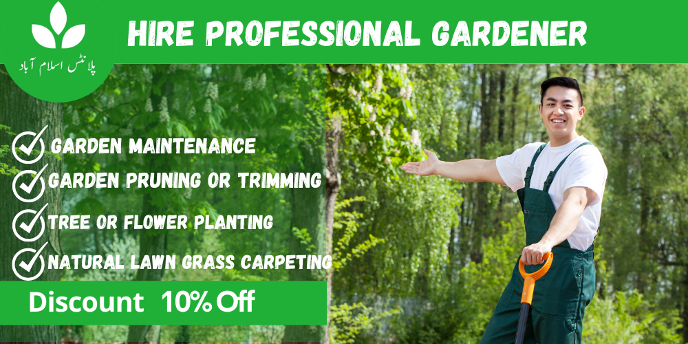 Hire Gardener services in Islamabad