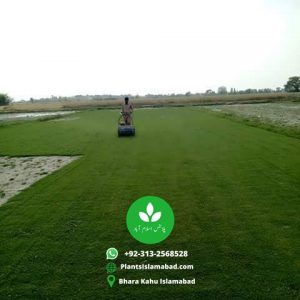 Koren Grass in Pakistan Lahore Islamabad Rawalpindi Karachi Gujrawanalla for sale