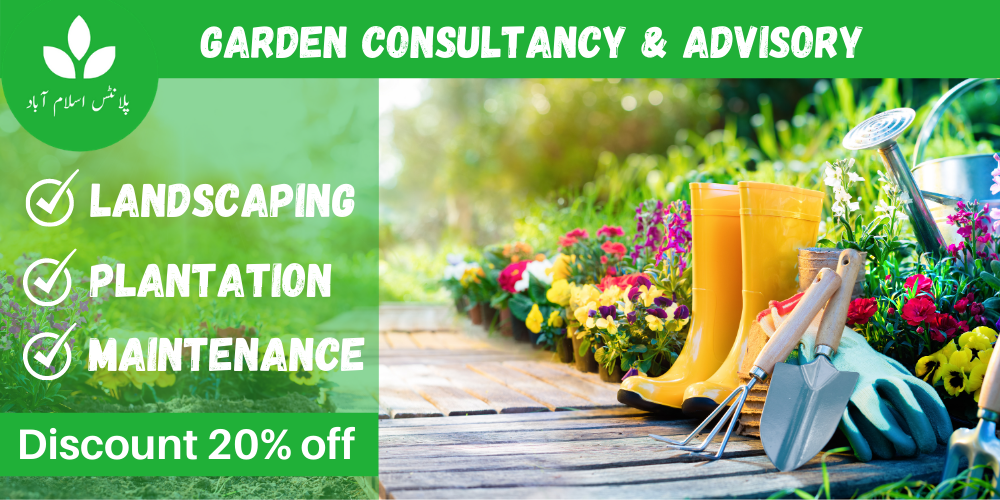 Gardening services in Islamabad