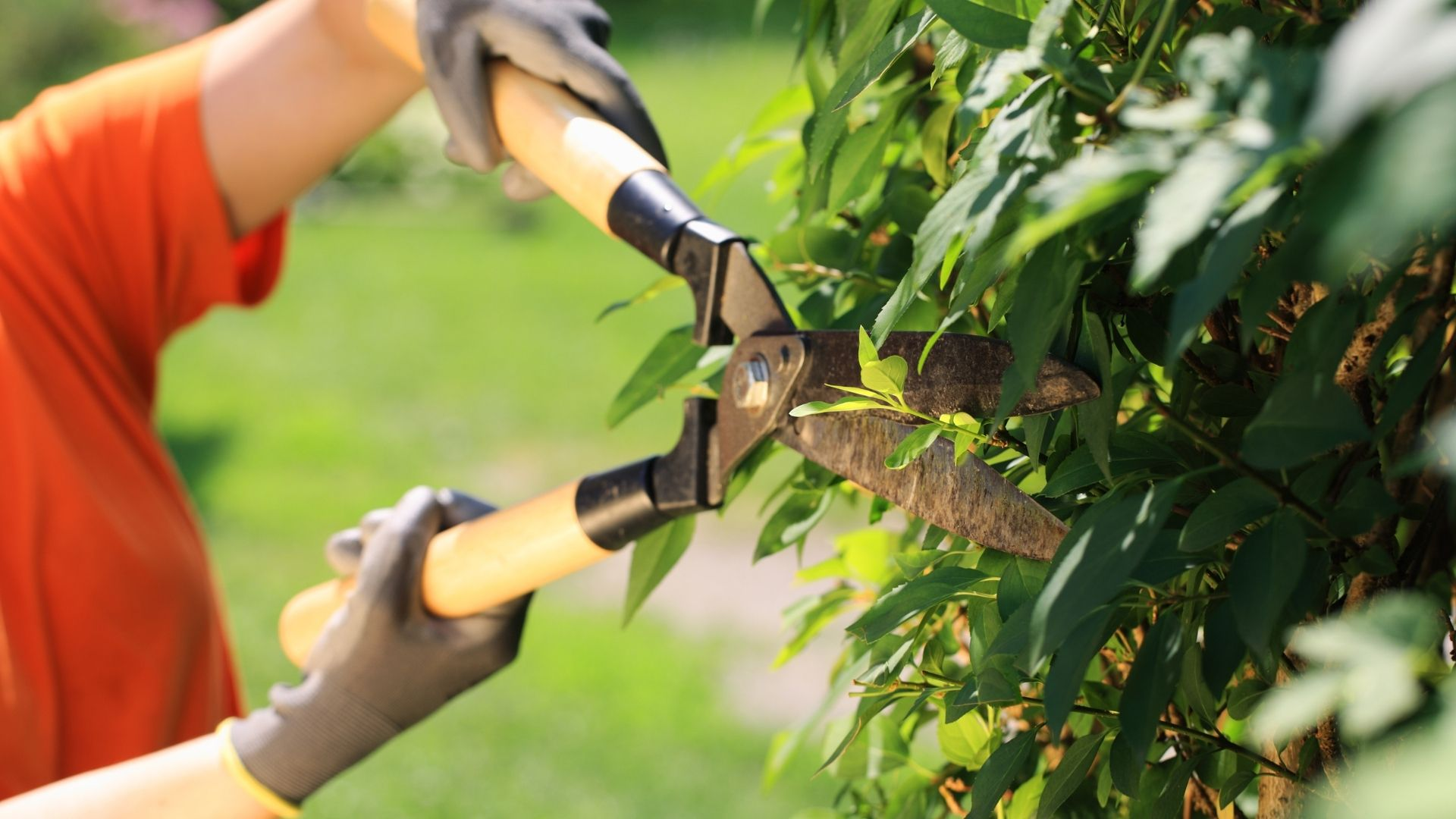 Hedge Trimming Services in Islamabad and Rawalpindi