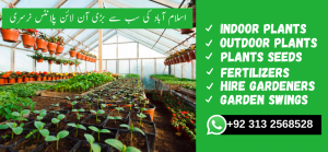 Indoor Plants in Pakistan