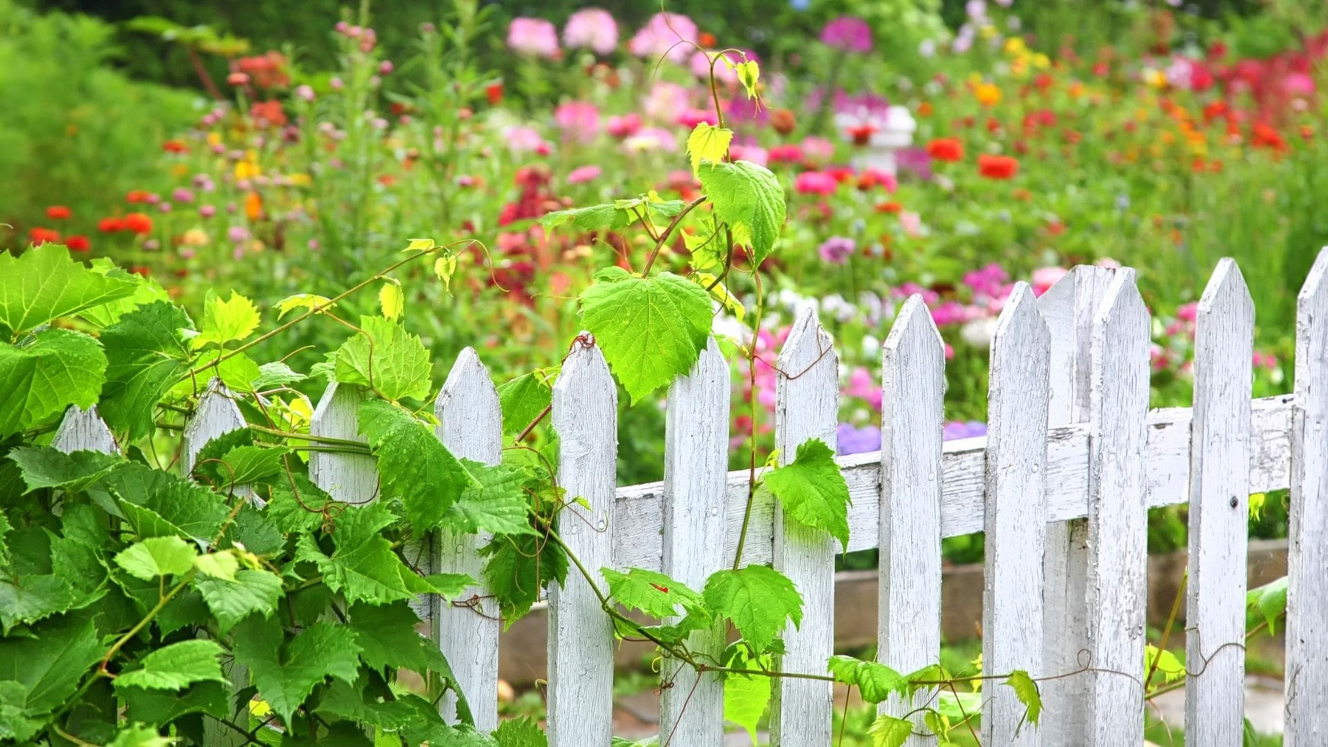 Landscape Fencing Services in Islamabad & Rawalpindi